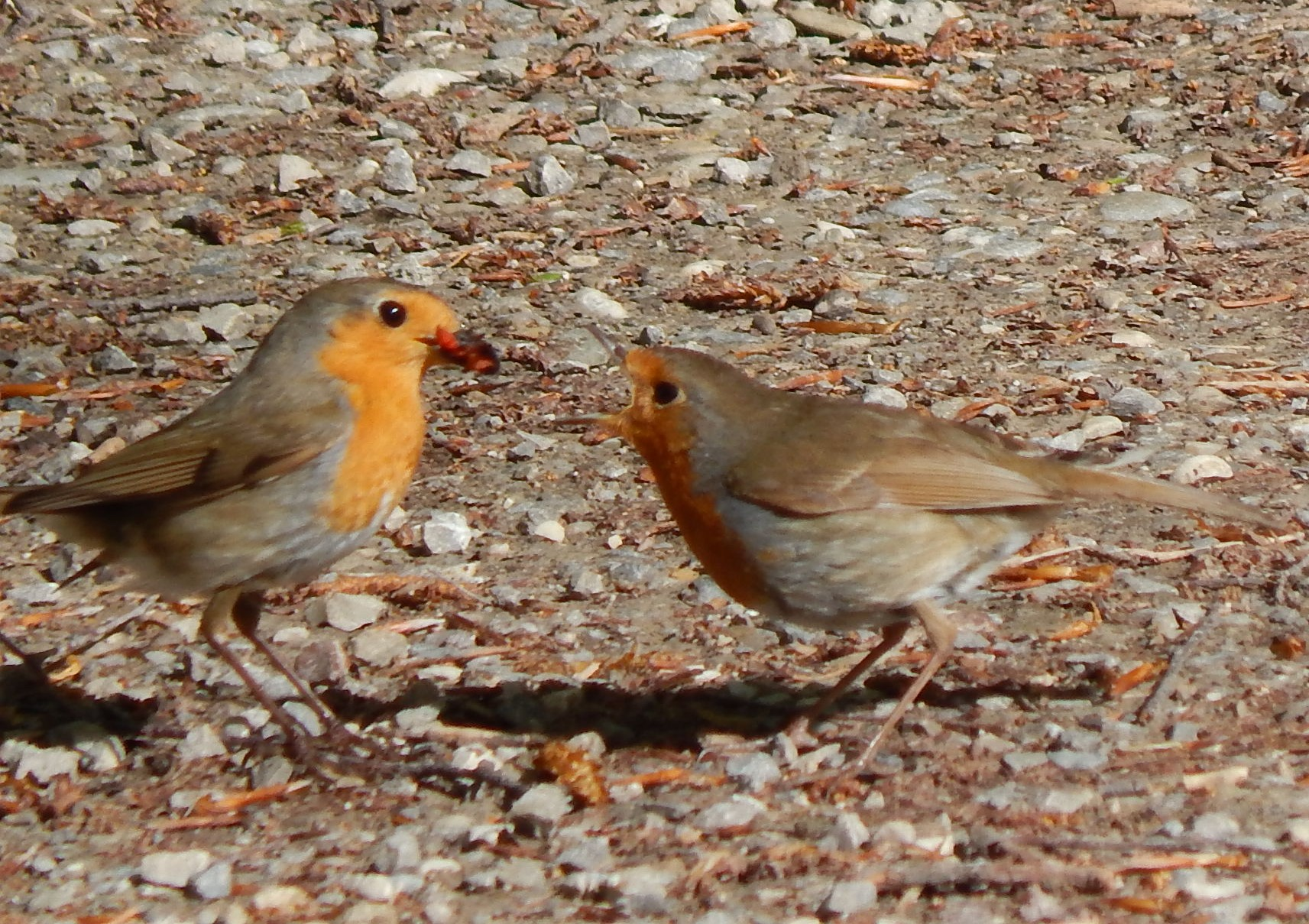 Vögel beobachten und gleichzeitig Englisch lernen